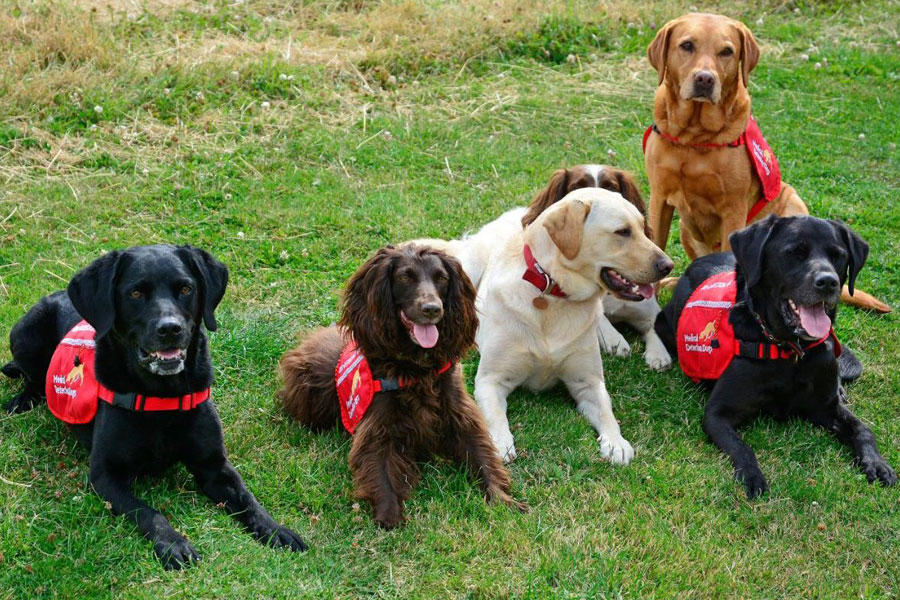 Medical-detection-dogs-group-shot